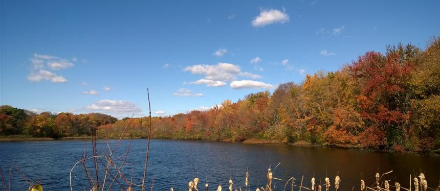 Hurley Pond (Fall)